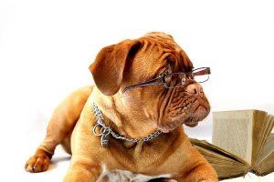 読書する犬