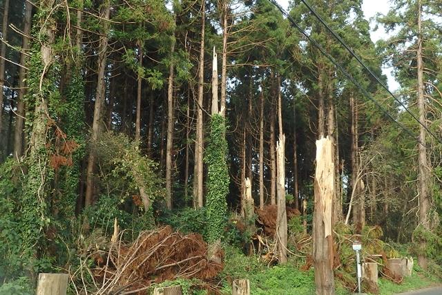 台風で倒木